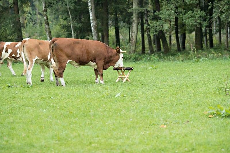 Bergmann Fotografin Muenchen Herzogstr.56 80803 Muenchen 089 / 21 54 35 94